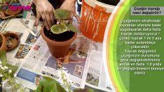 Çiçeğin toprağı nasıl değiştirilir ?