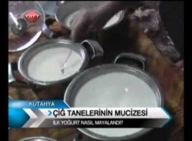 Çiy Damlasının Sırrı ,ilk yogurt nasil  mayalandi.