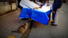 Hamile bir kedi balık için dilenirse..  ve Ocakbaşı Akşam Menüsü
