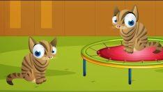 10 Küçük Kedicik – Saymayı Öğreniyoruz – Çocuk Şarkısı