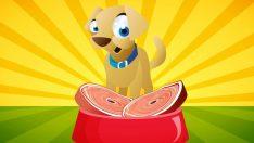 Köpeğim Hav Hav Der – Çocuk Şarkısı Sözleri
