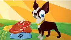 Köpeğim Hav Hav Der – Köpeğim Benden Ne İster? Sözleri Dinle