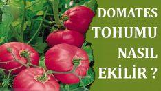 Domates Tohumu Nasıl Ekilir