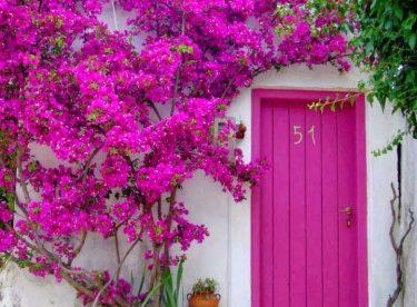 Rengarenk çiçekli kapı giriş tasarımları