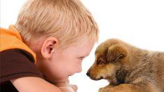 Hayvan Sevgisi Ve Çocuklar