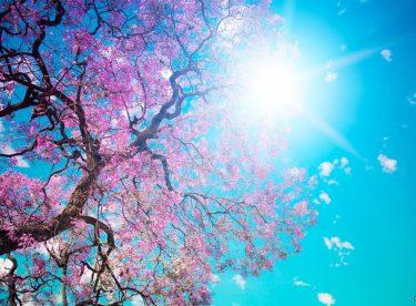Bu Bahar Uçuşan Kelebekler Daha Renkli Olacak