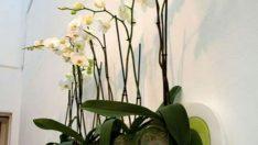 Evdeki Çiçeklerin Bakımı