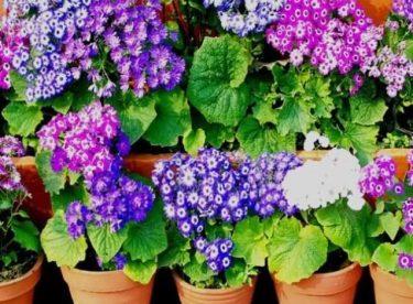 Saksı Bitkileri Hakkında İpuçları