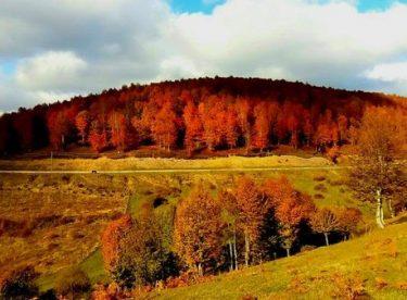 Sonbahar da güzel bir tatil yapabilir ve dinlenebilirsiniz