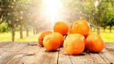 Kış Aylarının Vazgeçilmez Meyvesi Portakal