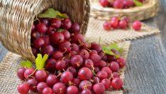 Mucize Meyve Üzüm