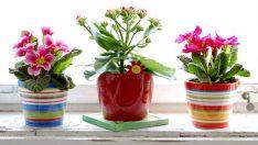 Odanız için 6 Harika Bitki