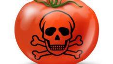 Gıda Zehirlenmelerine Neden Olan Etmenler Nelerdir?