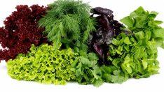 Yeşillikler Buzdolabında Bozulmadan Nasıl Saklanır?