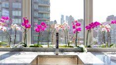 Orkide Çiçeğini Çoğaltma! Kendi Orkidenizi kendiniz Yetiştirin