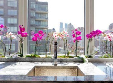 Evdeki güzelliklerin çoğaltılması veya orkidelerin çoğaltılması