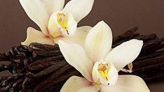 Vanilya Bitkisi Hakkında Merak Edilenler