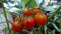 Balkonda Meyve ve Sebze Yetiştirmenin Püf Noktaları