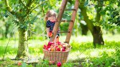 Kaliteli Meyve ve Sebze Nasıl Seçilir?