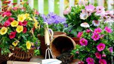 Kış Bahçelerinin Püf Noktaları Nelerdir?