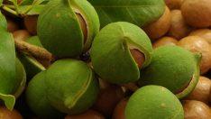 Gelmiş Geçmiş En Mucizevi Yağ: Macadamia