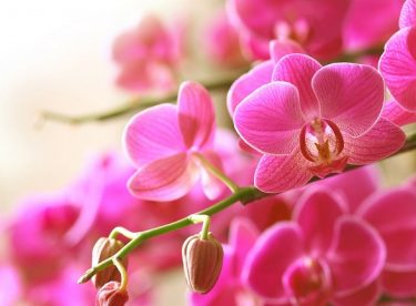 Orkide Bakımı Hakkında Öneriler