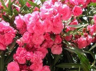 Çiçeklerin Hızlı Büyümesi için Ne Yapmalı?