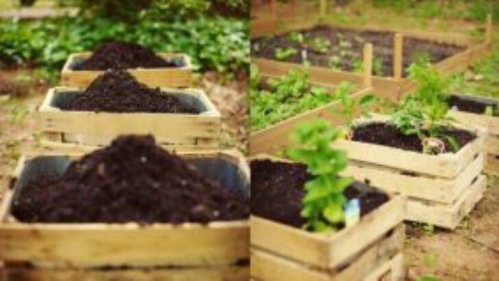 İnanılmaz Bahçe Düzenleme Fikirleri – Kendin yap