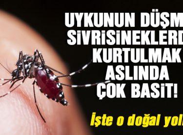 Sivrisineklerden Kurtulmak İçin Etkili Yöntemler