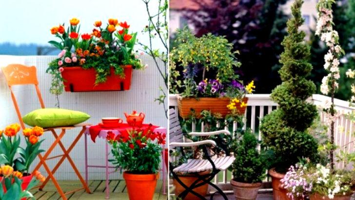 Çiçeklerin Toprakları ve Saksıları Ne Zaman Değiştirilmeli?