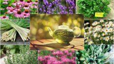 En Şifalı Bitkiler ve Faydaları