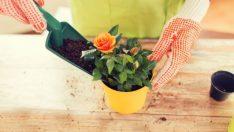 Çiçek Yetiştirirken Dikkat Edilmesi Gerekenler Nelerdir?