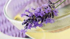 Lavanta Çiçeği- Lavanta Faydaları