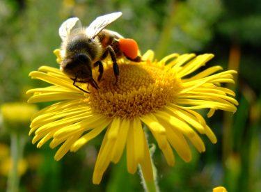 Sebze ve Bitkiler İçin Ev Yapımı Doğal İlaç Tarifleri