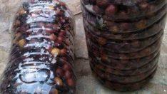 Siyah zeytin nasıl yapılır