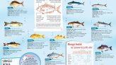 Hangi Balık Hangi Mevsimde Yenir?