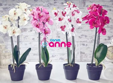 Orkide Yetiştirmenin Püf Noktaları