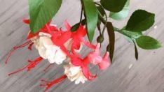 Kağıttan Küpe (Fuchsia) Çiçeği Yapımı