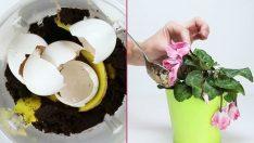 Çiçeklerimizi Canlandıracağınız 10 Pratik Bilgi