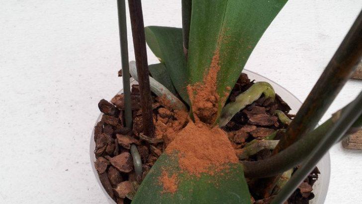 Solan Bitkiler İçin Tarçınlı Karışım