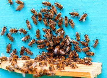 Arıların İnsan Hayatı İçin Önemi