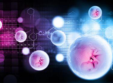 Embriyo Donasyonu Nedir?