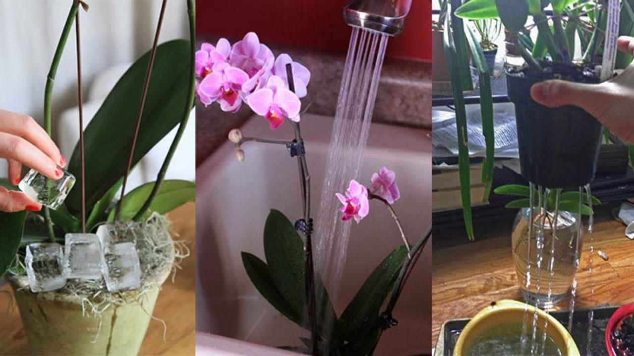 nagehanın tığ işleri atölyesi adlı kullanıcının tığ işi çiçek ... | 720x1280