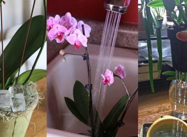 Orkidenin Çiçek Açması İçin Ne Yapmalı?