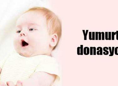 Yumurta Donasyonu Nedir? – Yumurta Donasyonu Fiyatları