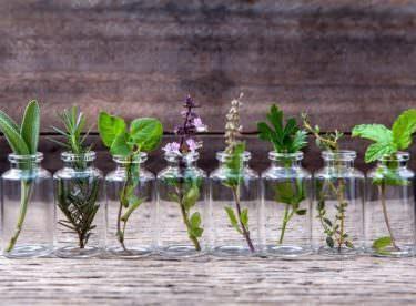 Evde Topraksız Yetiştirebileceğiniz Bitkiler