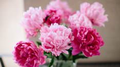 Evinize Şans ve Huzur Getirecek  Çiçekler