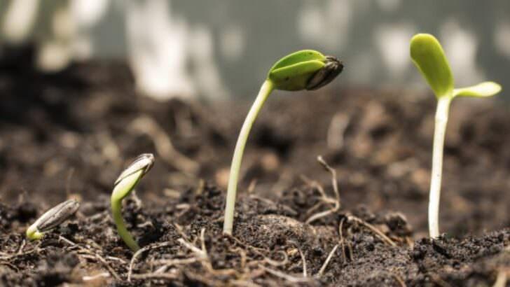 Gübreler ve Organik Toprak İyileştiricileri