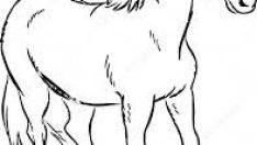At çizim çalışma kağıtları