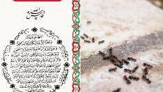 Karınca Duası – Karınca Duasının Faziletleri